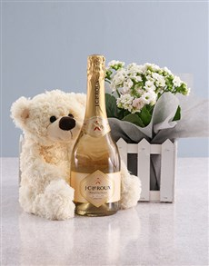 flowers: White Kalanchoe And JC Le Roux Gift Hamper!
