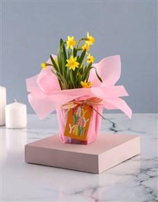 gifts: Yay Daffodil Plant!