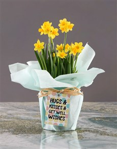 flowers: Get Well Wishes Daffodil Plant!