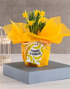 gifts: Thanks A Bunch Daffodil Plant!