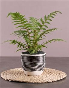 flowers: Fern Plant in Striped Pot!