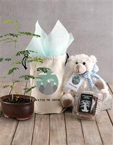 plants: Watch Me Grow Baobab Tree with Boy Teddy Plush!