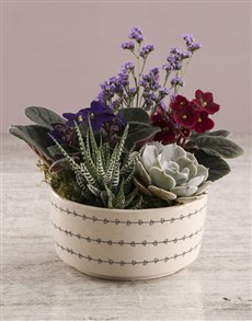 plants: African Violet Flair In Ceramic Pot!