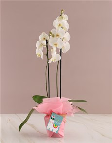 gifts: Pretty in Pink Birthday Orchid!