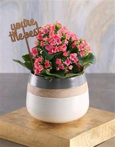 flowers: The Best Cerise Kalanchoe Plant!