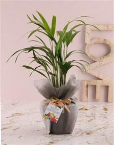 flowers: Areca Bamboo Birthday Planter!