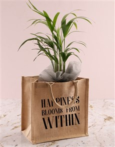gifts: Areca Bamboo Planter In Bag Of Happiness!