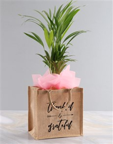 gifts: Areca Bamboo Planter In Hessian Tote Bag!