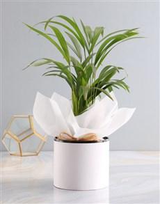 plants: Areca Bamboo Planter!