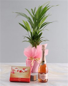 gifts: Areca Bamboo Planter With Sweet Delights!