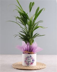 gifts: Areca Bamboo Planter Just For You!