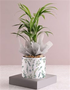 gifts: Areca Bamboo Planter In Pattern Pot Sleeve!