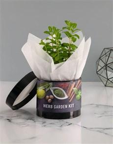 plants: Fresh Herb in Hatbox!
