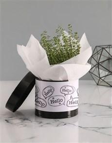 plants: Hello Herb in Hatbox!