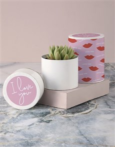 flowers: Smooches Succulent in Hatbox!