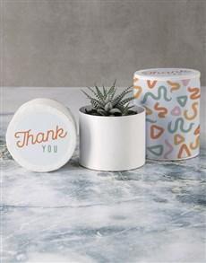 flowers: Gratitude Succulent in Hatbox!