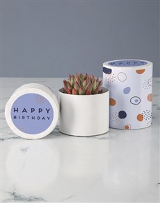 flowers: Birthday Celebrations Succulent in Hatbox!