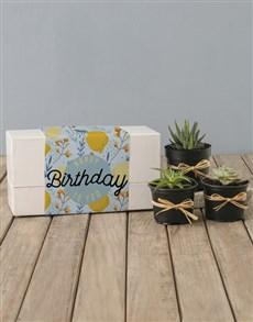 flowers: Lemon Succulent Birthday Box!