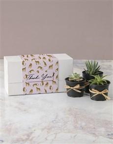 plants: Cheetah Succulent Thank You Box!