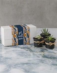 plants: Succulent Get Well Soon Box!