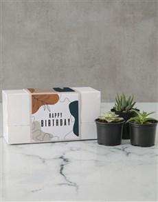 flowers: Succulent Birthday Box!