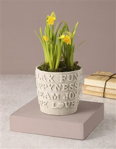 gifts: Kind Words Rustic Potted Daffodil!