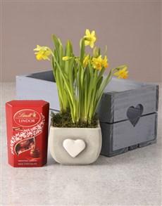 gifts: Endearing Daffodil Hamper!