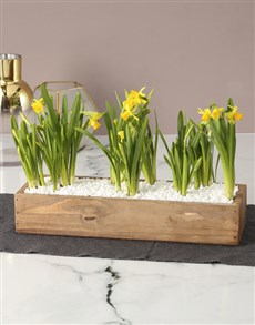 flowers: Born From Stone Daffodil Crate!