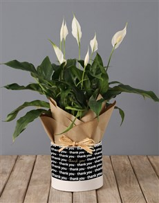 flowers: Spathiphyllum in Thank You Hat Box!