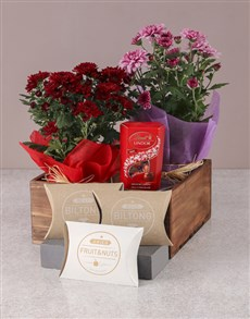 plants: Pink and Red Chrysanthemums Gourmet Gift Set!