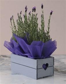 plants: Lavender Heart Crate!