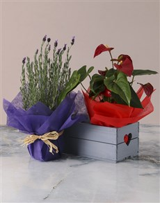 flowers: Lavender and Anthurium in Heart Crate!