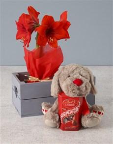 flowers: Romantic Red Amaryllis Hamper!