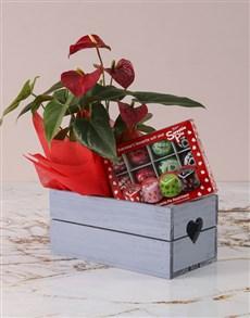 flowers: Anthurium Sweetie Pie Hamper!