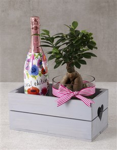 plants: Bonsai Birthday Hamper For Her!