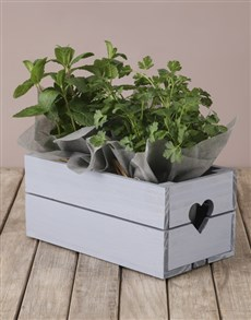 plants: Mixed Herbs Crate!