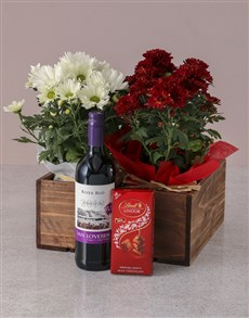 plants: Red and White Chrysanthemum Gift Hamper!