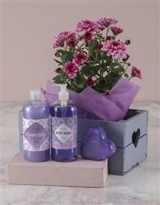plants: Purple Chrysanthemum Bath and Body Hamper!