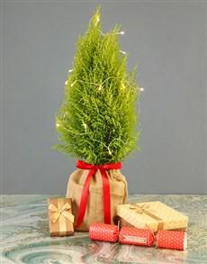 flowers: Mini Christmas Tree With Fairy Lights!