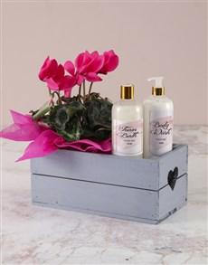 plants: Cerise Cyclamen Bath And Body Crate!
