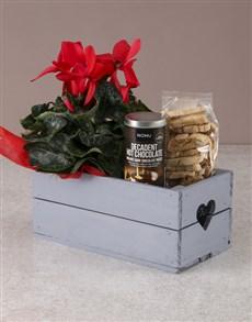 flowers: Cerise Cyclamen Gourmet Crate!