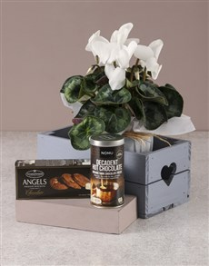 plants: White Cyclamen Gourmet Crate!