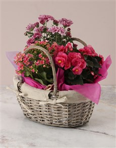 plants: Pink Begonia Basket Arrangement!