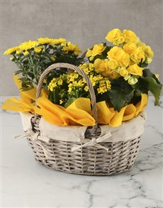 plants: Brilliant Yellow Begonia Basket Arrangement!