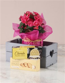 flowers: Pink Begonia With Biscuits Heart Crate!