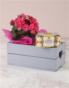 flowers: Pink Begonia with Chocs Heart Crate!