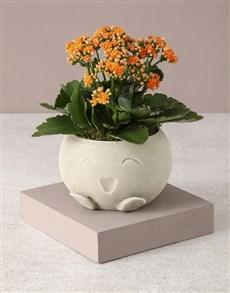 flowers: Kalanchoe In Mojo Pot!