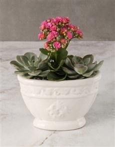 flowers: Cerise Kalanchoe In Roman Pot!