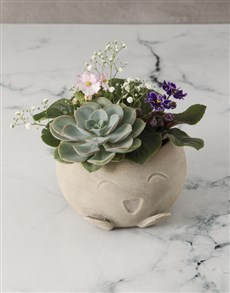gifts: African Violet Garden In Mojo Pot!