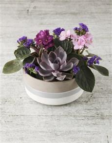 gifts: African Violet Garden in Rustic Pot!